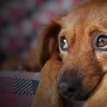 Tüntetésen követelik, hogy kerüljön börtönbe a balotaszállási kutyakínzó