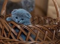 Elítélték az élő kismacskákat elásó budapesti nőt