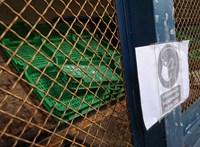 Lancet: Nem halálosabb a koronavírus brit mutánsa, csak sokkal fertőzőbb