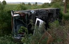 Rovarcsípés miatt történhetett súlyos buszbaleset Borsodban