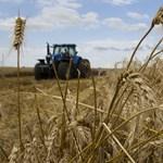 Zuhanó élelmiszerárak a világpiacon