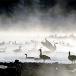 Már a vadmadarak is hullanak: Egyre terjed a madárinfluenza Európában