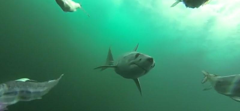 Cápatámadásban halt meg egy cseh turista Egyiptomban