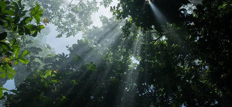 Még a trópusi növények fele is eltűnhet, akkora forróság lesz a klímaváltozás miatt
