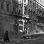 """Eörsi László: A""""budai srácok"""" 1956"""
