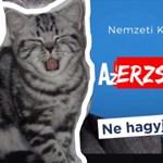Erzsi, a kormánykritikus szürke macska is tiltólistára került a TV2-nél