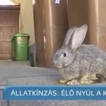 Élő nyuszit dobtak a Szeged Televízió kukájába