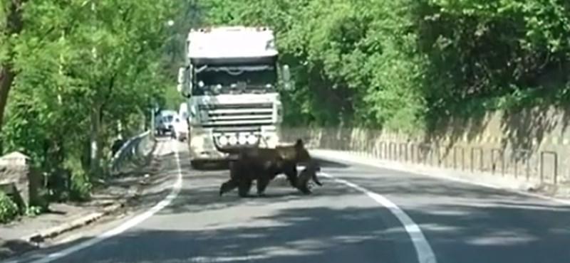 Medve ölt meg egy csikót Csinódon