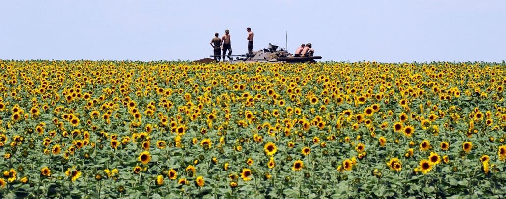 afp.14.07.10. - Donyeck, Ukrajna: ukrán katonák a várostól délre található napraforgótábla mellett.   - 7képei