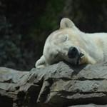 Ma lesz az Állatkertek éjszakája