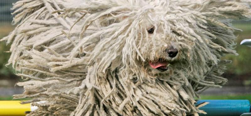 Ha ön stresszes, a kutyája is az lesz