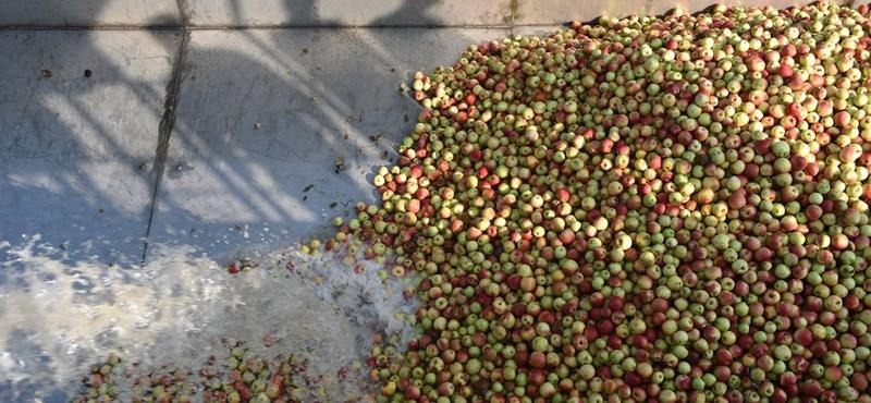 Harminc éve még vitték a kicsit, a zöldet is, ma csak szenvednek az almatermelők
