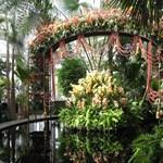 A világ legnagyobb orchidea parkja készül a kínai Hajnanon