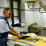 Különleges fotók: meglőtt gólyát röntgeneztek az állatkertben