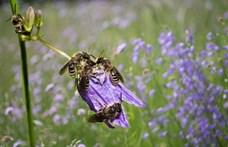 Méhcsaládot költöztetnek az Agrárminisztérium erkélyére