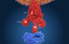 111 újabb áldozata van a koronavírusnak