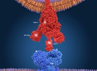 128 lakót fertőzött meg a koronavírus brit mutációja egy belga idősotthonban