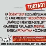 Kijátszotta a patkánykártyát a Kétfarkú ellen a visszafogott Bayer Zsolt