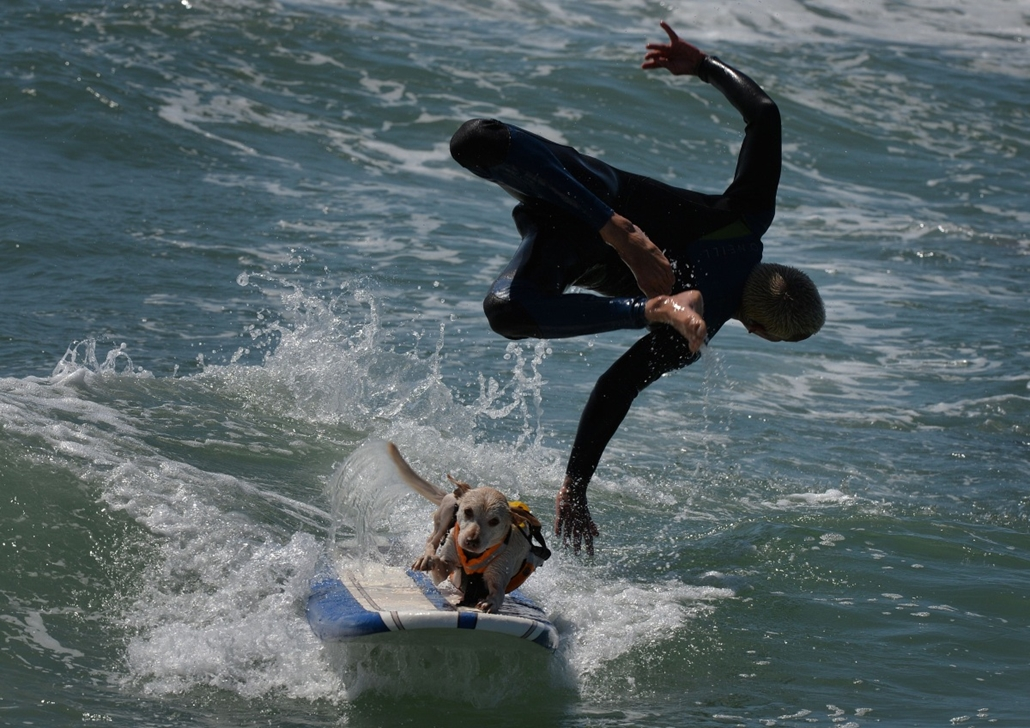 afp.14.09.29. - Huntington Beach, Kalifornia, USA: szörfbajnokság kutyáknak - kutyaszörf, szörf
