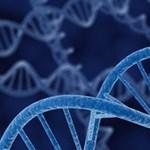 Génhiba növelheti az impotencia kockázatát