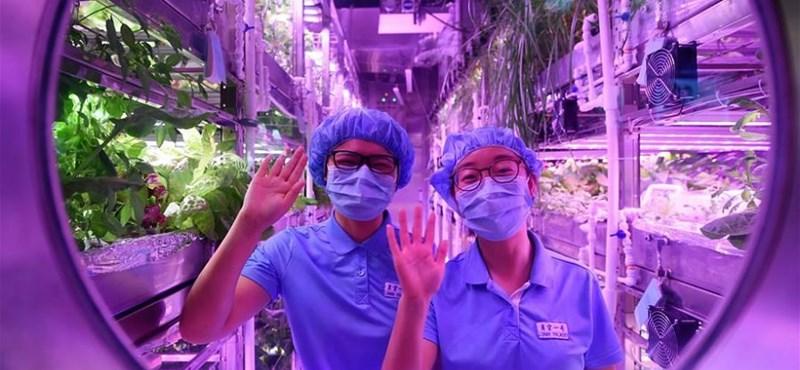 200 napra elzártak a világtól négy embert, így teszteli Kína, milyen lenne egy másik bolygón élni