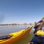 Vergődő sasokat mentett ki a Dunából két magyar kajakos – videó