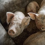 Tilos klíma nélküli járművekben állatokat szállítani