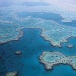 -90 százalék: drasztikus csökkenést vettek észre a Nagy-korallzátonynál