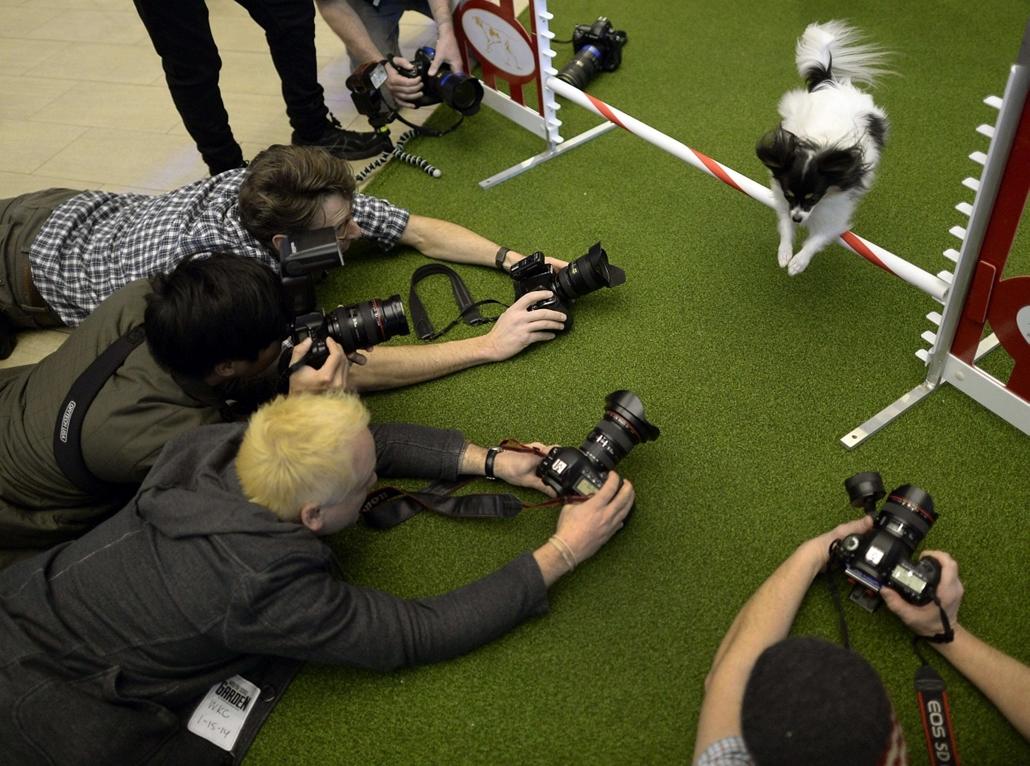afp. 0113-019 - hét képei - 2014.01.15. New York - USA - kutya, fotósok