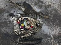 Kétezer állat gyomortartalmát vizsgálták meg, az eredmény némelyiknél sokkoló