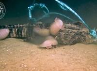 """Videó: Feneketlen bendőjű, csontevő """"rémségekre"""" bukkantak a tenger fenekén"""