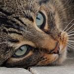Kétszer is magához tért egy gázkamrában megölt macska