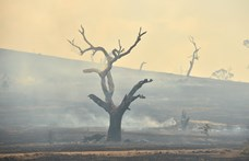 Elpusztult a tűzvészben az ausztrál erdők ötöde