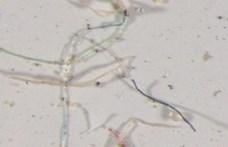 Többtonnányi mikroműanyagot sodor a szél az óceánokba