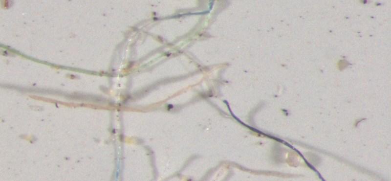 Felfoghatatlan számú mikroműanyag vesz körbe minket – a hatása pedig ismeretlen