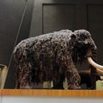 Mamutot klónoznak, hogy a saját Jégkorszak Parkjukban mutogassák