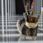 2030-ra lehet olyan eszközünk, amely leállítja az epilepsziás rohamot
