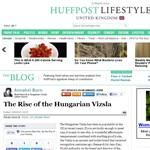 Imádják a britek a magyar vizslát