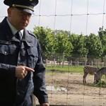 """A rendőrség legfrissebb videóművészeti alkotása a """"Brit tudósok és a zebra"""""""
