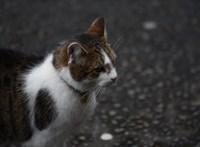 Egy nagyon angolos macska: Larry bekéredzkedett a brit kormányülésre