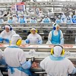 Túlkínálat miatt esik a magyar csirke ára