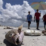 Nagyon csúnya látványt nyújtanak most Florida partjai