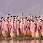David Attenborough új természetfilmje gyönyörűbb, mint valaha – videó