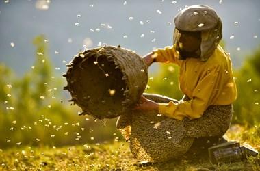 Méz-királynő – Páratlan felvételek egy bámulatra és irigylésre méltóan tiszta életről