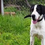 Lefagyasztott kutyatetemeket találtak egy német férfi házában Zalában
