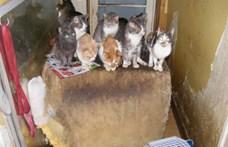 Borzasztó körülmények között tartott többtucatnyi macskát két panellakásba zárva egy békéscsabai nő és lánya