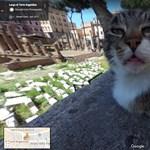 Csak forgatja a Google Street View-t, és egyszer csak önre csodálkozik egy macska