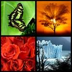 Legkedvesebb emlékeiből szeretne mozaik háttérképet? Ezzel ingyen megoldhatja