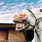 Csiklandós állatokkal kutatják a nevetés evolúcióját