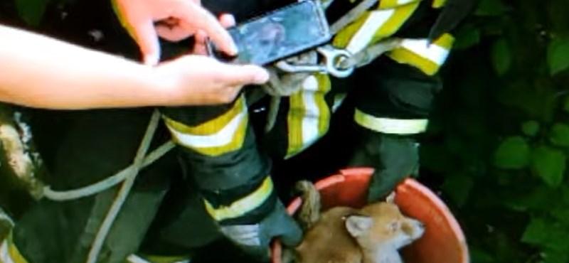 Egy vödörnyi rókát húztak ki a kútból Sátoraljaújhelyen - videóval